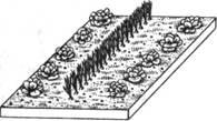 Смешанные посевы зеленого лука и кочанного салата.