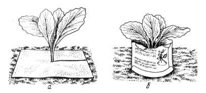 Защита от капустной мухи и защита от гусениц совки.