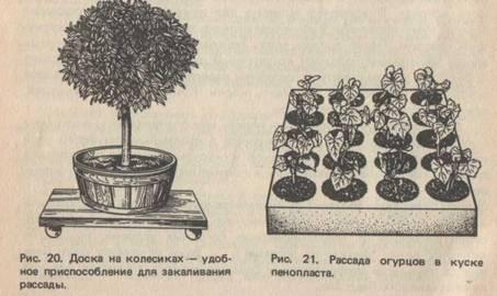 доска с колесиками и растения в горшочках