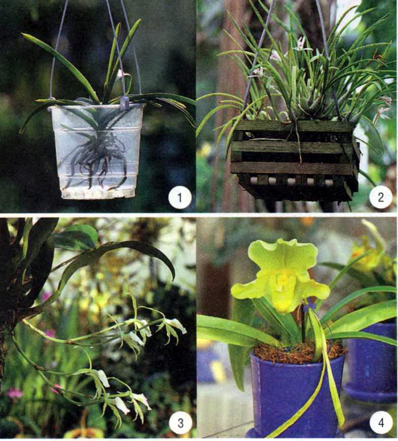 Горшки для орхидей своими руками 99
