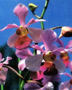 Как начать выращивать орхидеи