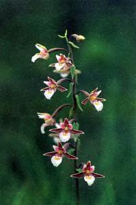 Правила по уходу за орхидеями