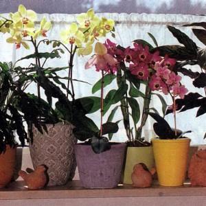 Размещение орхидей