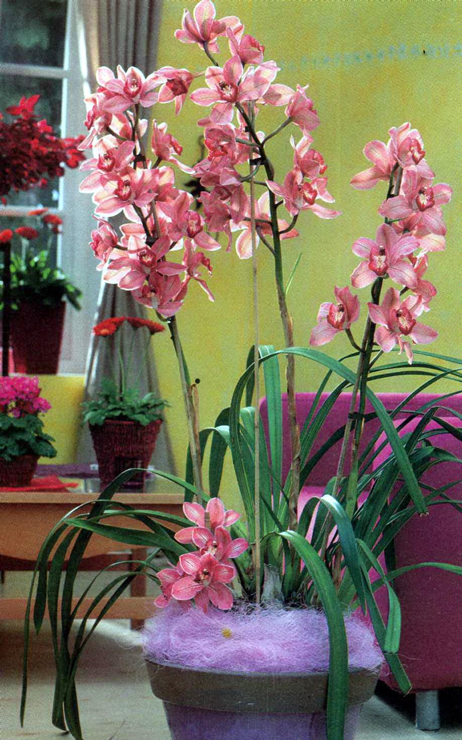 Виды орхидей и их уход в домашних условиях фото