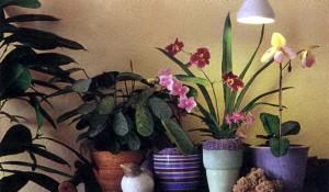 Свет для орхидей