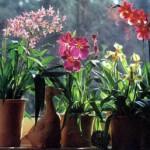 Температура для орхидей