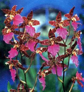Уход и размножение орхидей
