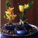 Влажность воздуха для орхидей