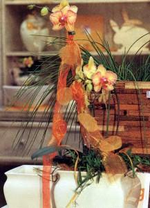 Выбор и покупка орхидей