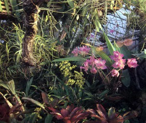Зимний сад для орхидей