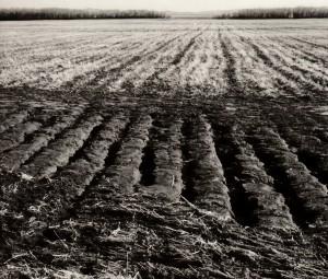 Как повысить содержание гумуса в почве