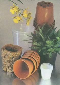 О цветах, всё и всем. Цветущие комнатные растения