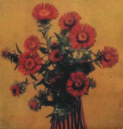 Цветок астры новоанглийской Роте…